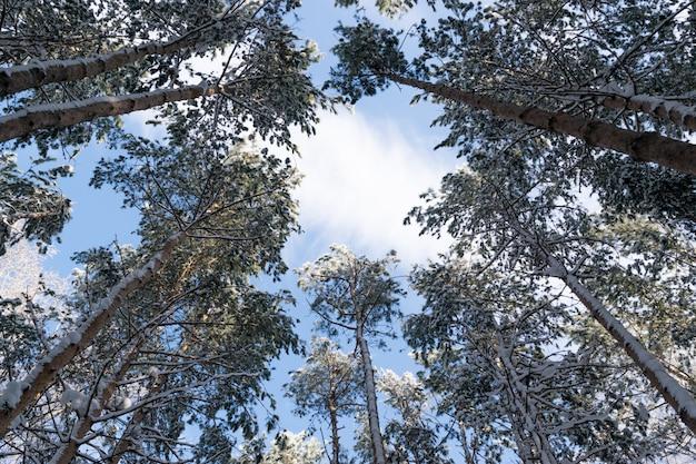 Winterfoto van blue sky omgeven door de boomtoppen