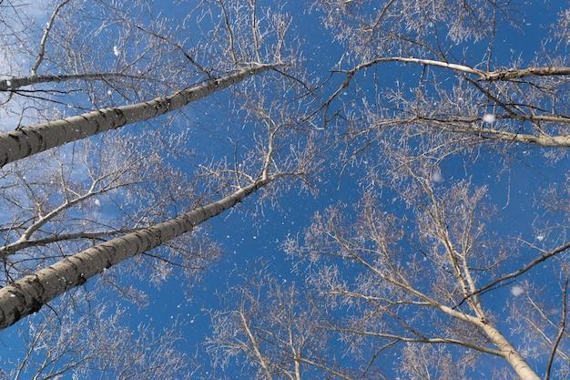 Winterfoto van blue sky, omringd door de boomtoppen. rijp vallen van de takken