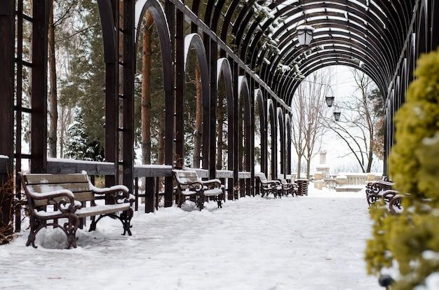 Wintergroene thuja close-up groeit in pergola, overdekte galerij. wintertijd park.