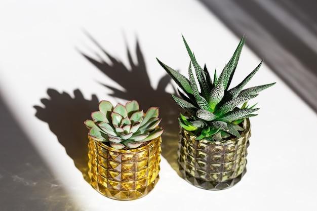 Wintergroene vetplanten in glazen potten, huisplanten cactus in kleine bloempotten met donkere schaduwen.