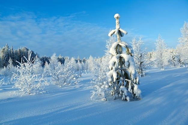 Winterlandschap. besneeuwde takken van bomen en struiken