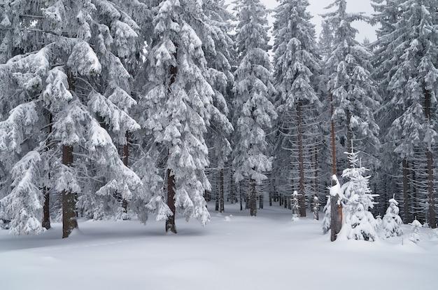 Winterlandschap bewolkte dag in een bergbos