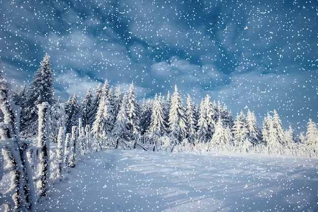 Winterlandschap bomen en hek in rijm