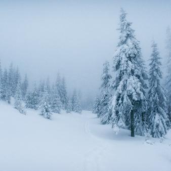 Winterlandschap bomen in vorst