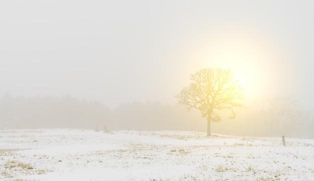 Winterlandschap bomen op sneeuw