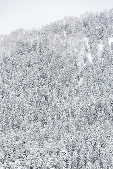 Winterlandschap bos