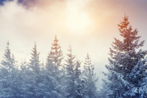 Winterlandschap gloeien door zonlicht. dramatische winterse scène.
