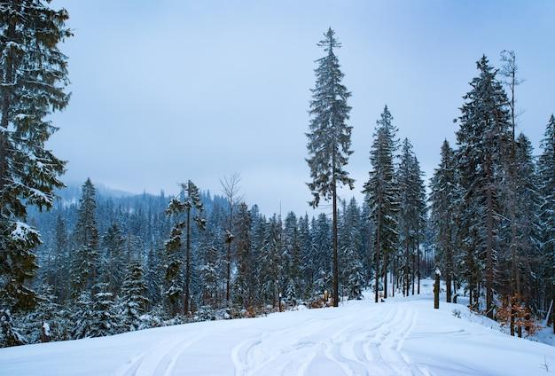 Winterlandschap, hoge slanke sparren