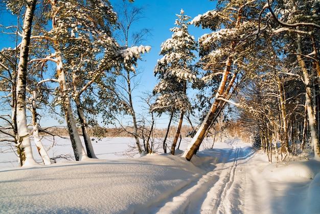 Winterlandschap in het met sneeuw bedekte bos en skiën. rusland. regio leningrad.