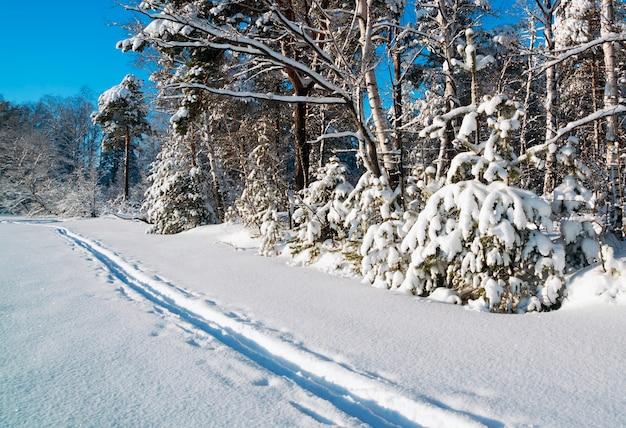 Winterlandschap in het met sneeuw bedekte bos en skiën