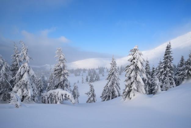 Winterlandschap met besneeuwd dennenbos in de bergen. ijzige dag met blauwe lucht