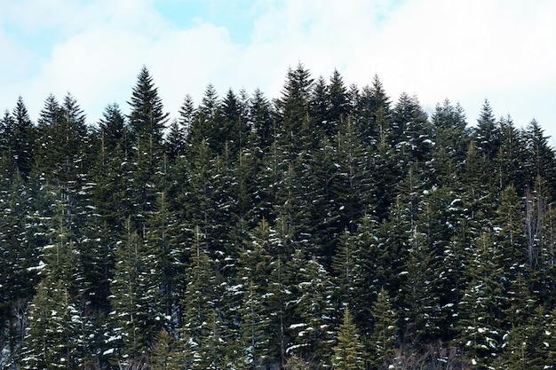 Winterlandschap met besneeuwde bossen hoog in de bergen op een zonnige dag.