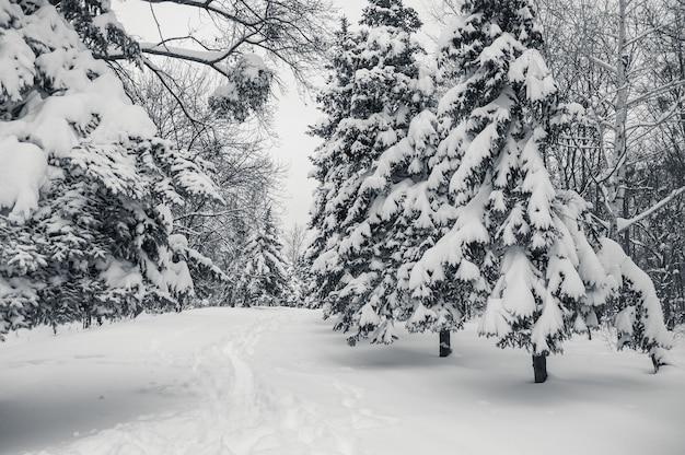 Winterlandschap met besneeuwde bossen