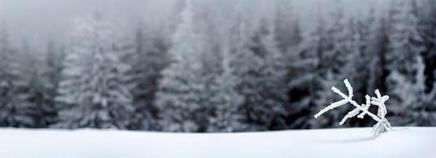 Winterlandschap met besneeuwde kleine dennenboom