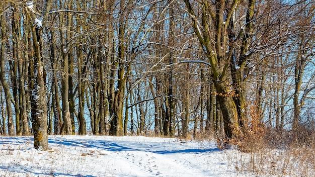 Winterlandschap met bomen in het bos bij zonnig weer