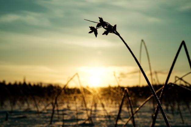 Winterlandschap met droge bevroren struik