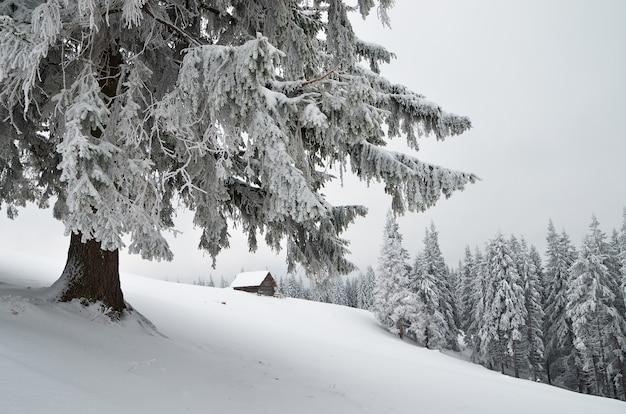 Winterlandschap met hut in een bergbos