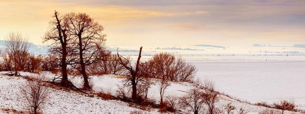 Winterlandschap met kale droge bomen op een achtergrond van besneeuwde brede vlakte bij zonsondergang