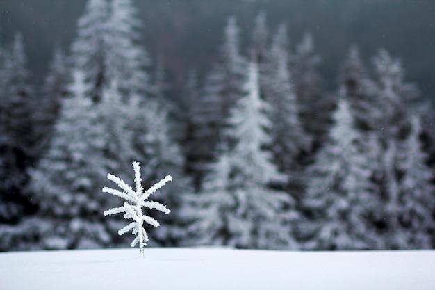 Winterlandschap met sneeuw bedekt kleine pijnboom