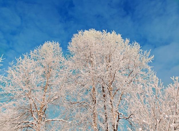 Winterlandschap. met sneeuw bedekte bomen