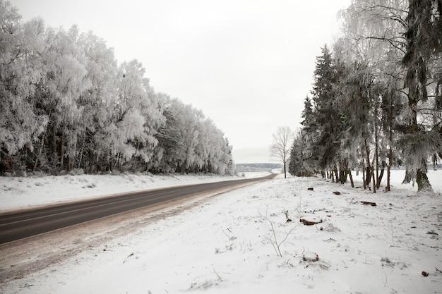 Winterlandschap met verschillende soorten bomen bedekt met witte sneeuw en vorst in het winterseizoen, een ijzige dag na een sneeuwval, weg