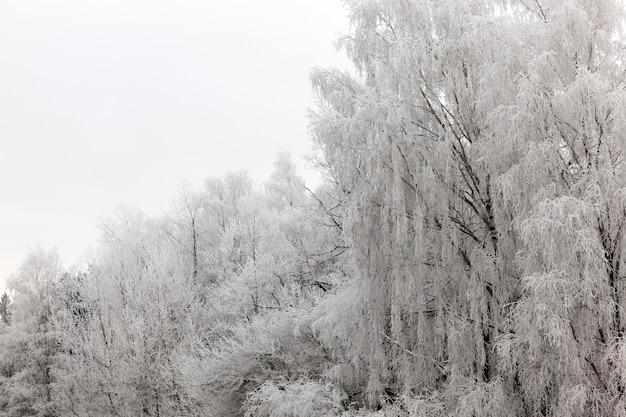Winterlandschap met verschillende soorten bomen