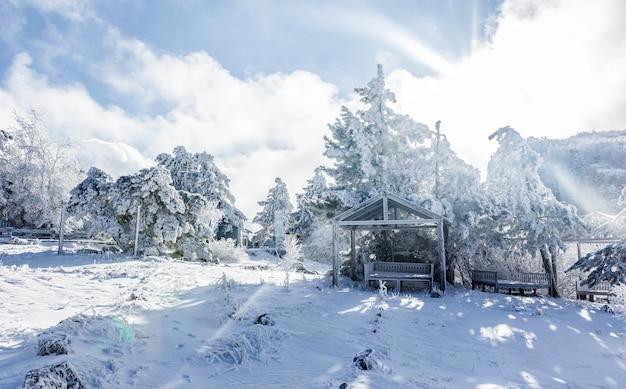 Winterlandschap op een bergtop met sneeuw bedekte bomen