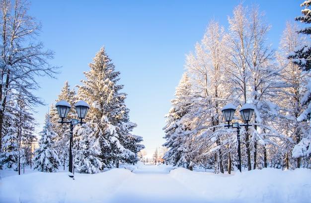 Winterlandschap op een zonnige dag