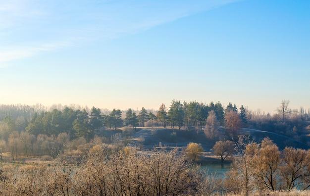 Winterlandschap, planten en bomen in de vroege ochtend