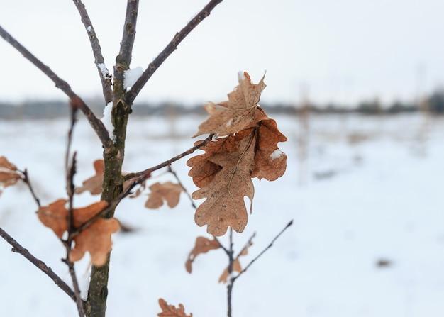 Winterlandschap, sneeuw bedekt bos