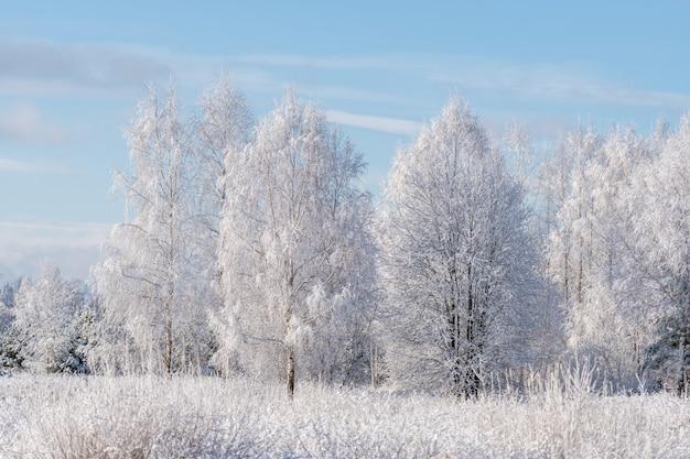 Winterlandschap van berijpte bomen tegen een blauwe hemel op een zonnige ochtend
