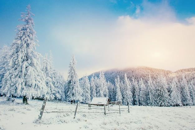 Winterlandschap van besneeuwde bomen