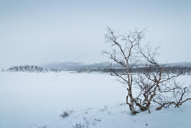 Winterlandschap van de toendra