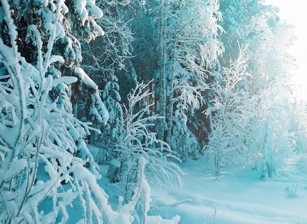 Winterlandschap. winter besneeuwd bos