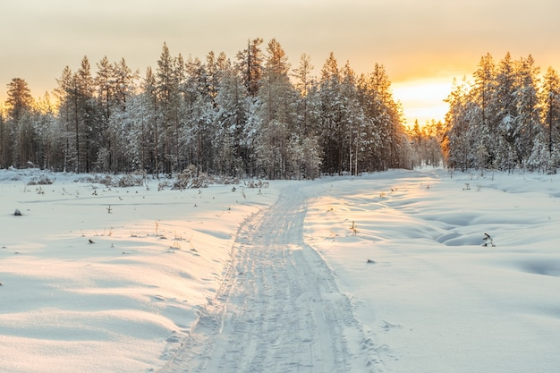 Winterlandschap. winter weg door een besneeuwde bos