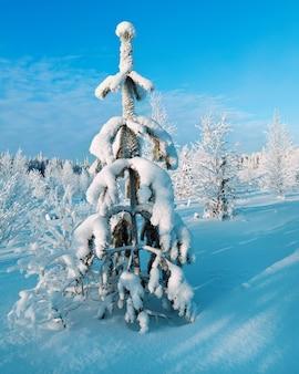 Winterlandschap. winterschoonheidsscène