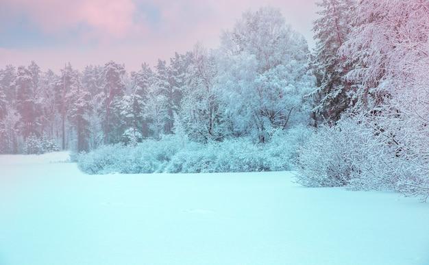 Winterlandschap. xmas achtergrond met witte sneeuwvlokken. zonlicht in het winterbos. letland