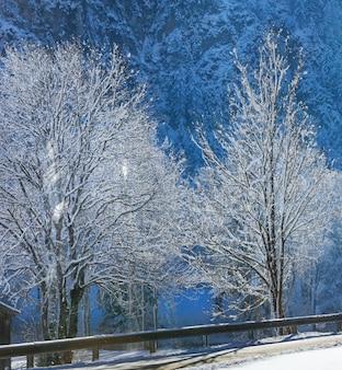 Winterlandweg met lichte sneeuwval, vallende sneeuw van de bomen en zonnestraal door twijgen.