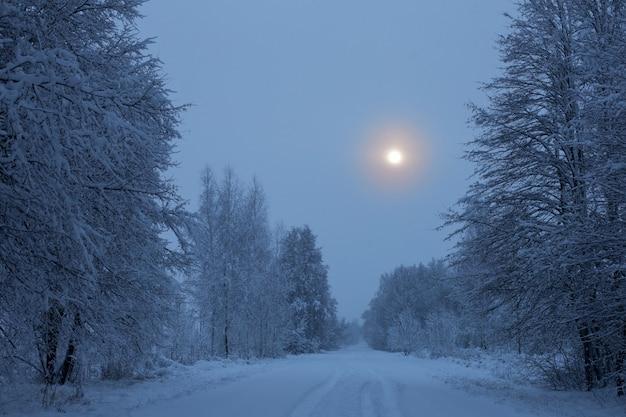 Winternacht besneeuwd landschap met bomen