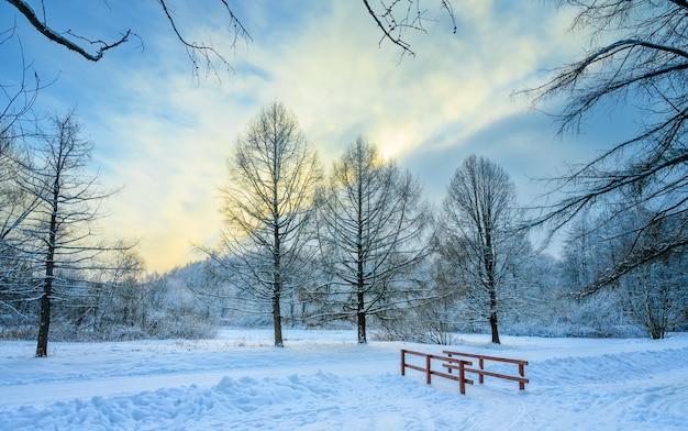 Winterpark in de avond. bevroren bomen bij zonsondergang in de schemering