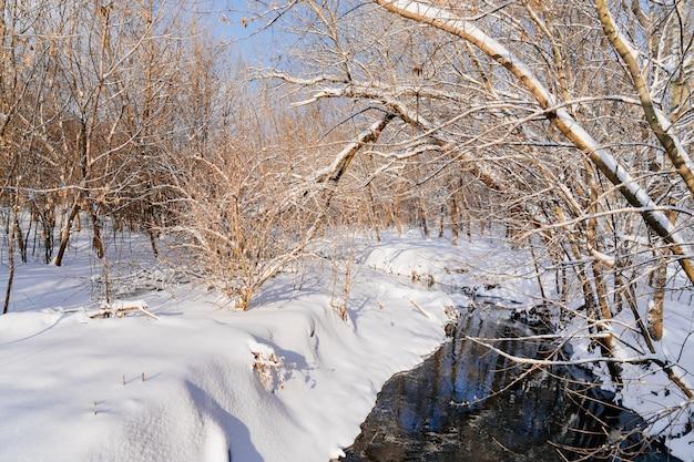 Winterpark in de middag. de stroom is niet bevroren, de bomen en de grond zijn bedekt met sneeuw. wandelingen in de natuur in de kou. winters verhaal.