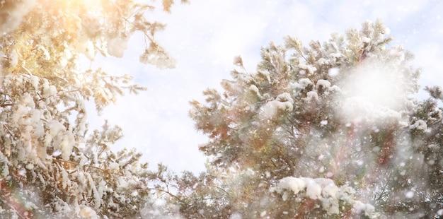 Winterpark. landschap bij sneeuwweer. januari dag.