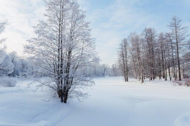 Winterpark met besneeuwde bomen op een heldere dag.