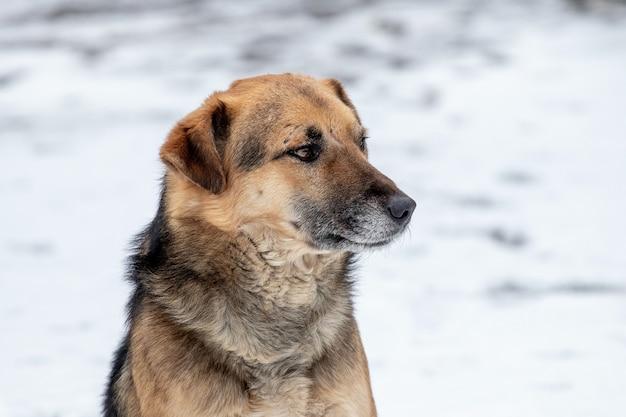 Winterportret van een hond op een achtergrond van sneeuw