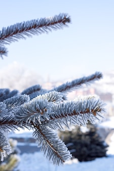 Winterse achtergrond. boom in de vorst