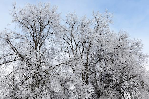 Winterseizoen in het bos