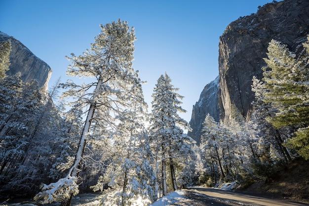 Winterseizoen in yosemite national park, californië, vs.