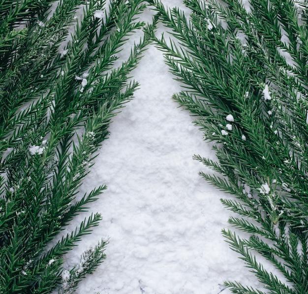 Winterseizoen, kerstconcepten ideeën met pijnboom op sneeuw