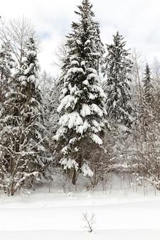 Winterseizoen van het jaar in het bos
