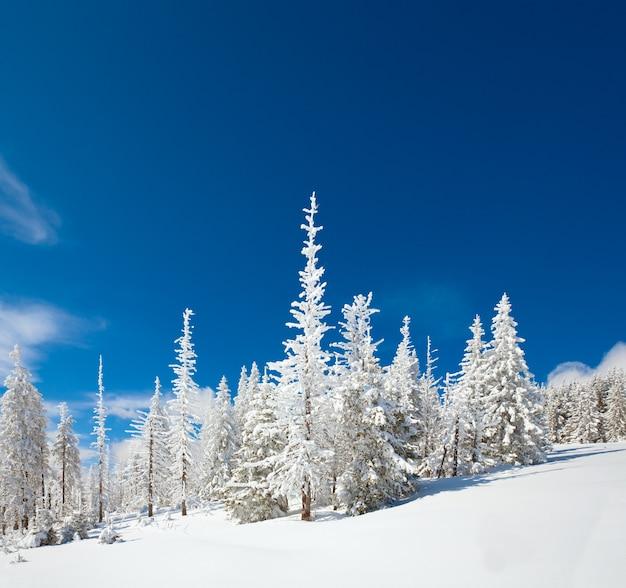 Wintersneeuw bedekte sparren op berghelling op blauwe hemelachtergrond